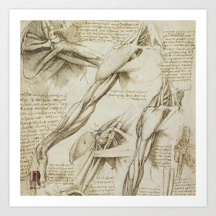 Leonardo Da Vinci Human Body Sketches Arms Art Print By Drawspots