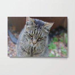Pensive cat Metal Print