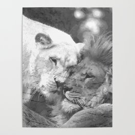 Lion in Love Valentine's Day Poster