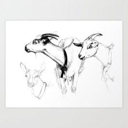 goats sk124 Art Print
