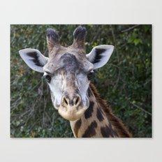 Giraffe Looking at You Canvas Print