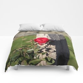 The lonesome rose Comforters