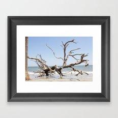Driftwood Tree Framed Art Print