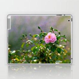Pink rose flower. Misty morning Laptop & iPad Skin