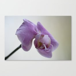 Orchid Photograph, pink and lilac flowers Canvas Print