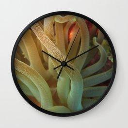 Big Anemone Cayman Wall Clock