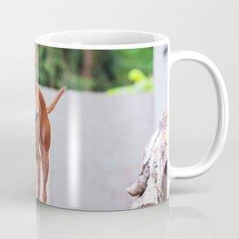 Portrait of red miniature pinscher dog Coffee Mug