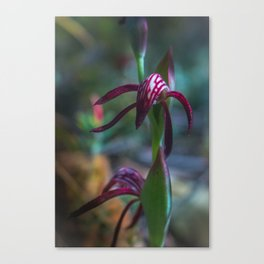 Orchid Flower Canvas Print