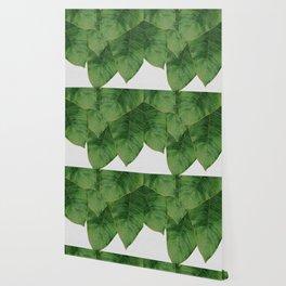Banana Leaf III Wallpaper