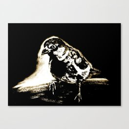 Black and White Sparrow Canvas Print
