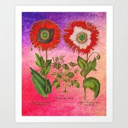 Vintage Botanical Collage - Poppies, Papaver Somniferum Art Print