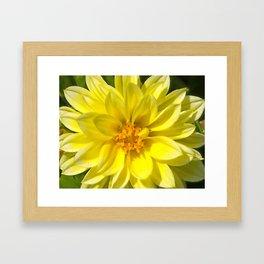 Floral Beauty #5 Framed Art Print