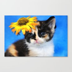 Calico Cutie Canvas Print