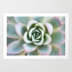 Green Succulent Art Print
