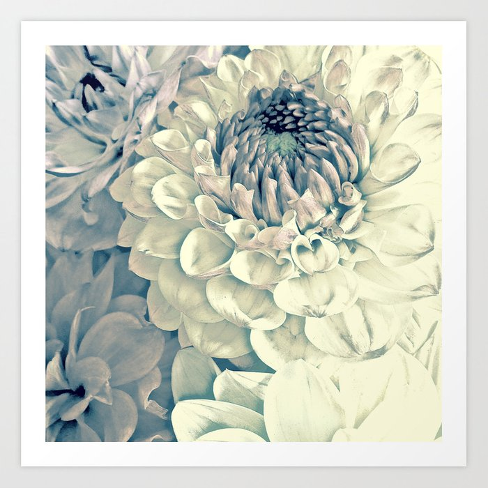 Creamy Turquoise And Pink Dahlias Art Print