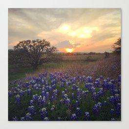 Texas Bluebonnet Sunset Canvas Print