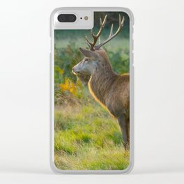 Stag In Early Sunshine Clear iPhone Case