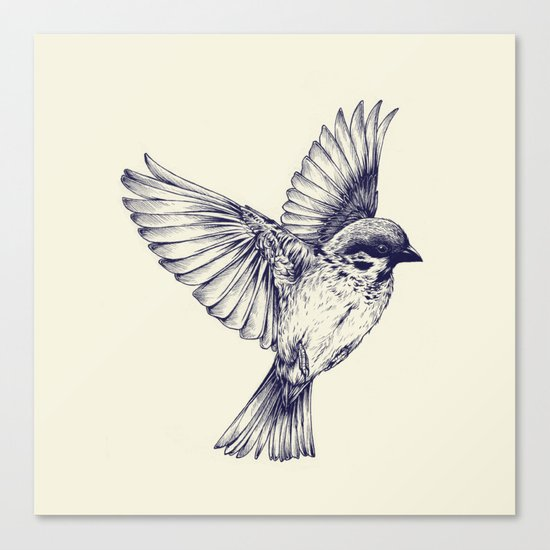 lost bird Canvas Print