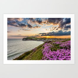 Freshwater Bay Sea Thrift Sunset Art Print