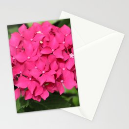 Pink Mop Head Hydrangea Stationery Cards