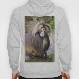Baboon Looking At me Hoody