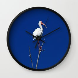 White Beauty Against Blue Wall Clock