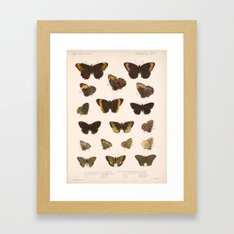 Vintage Scientific Hand Drawn Illustration Anatomy Of Butterfly Insect Patterns Biology Art Framed Art Print