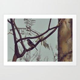 DSC_0617 Art Print