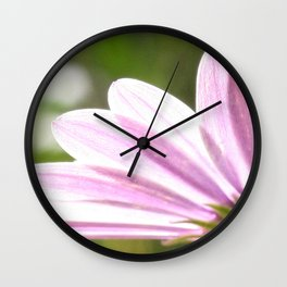 Pink African Daisy in the Light Wall Clock
