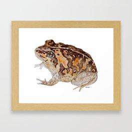 Plump Little Froggy Framed Art Print