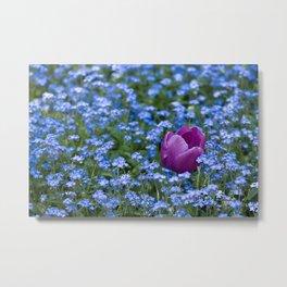 Pink Tulip in the blue Metal Print