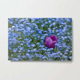 Pink Tulip in the blue Metal Print