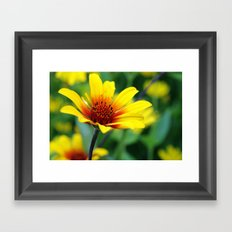 Prairie Flower II Framed Art Print