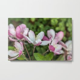 Delicate Spring Bloom Metal Print