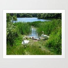 Bosherston Lily Ponds.Pembrokeshire.Wales. Art Print