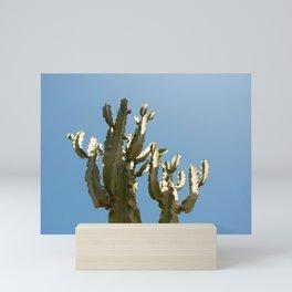 Cactus blue background Mini Art Print