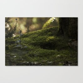 Muschio Naturale Canvas Print