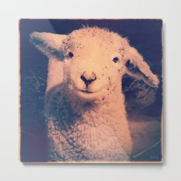 Innocence (Smiling White Baby Sheep) Metal Print