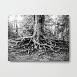 Tree of Life and Limb Metal Print