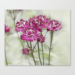 Pink Flowers in the Mist Canvas Print
