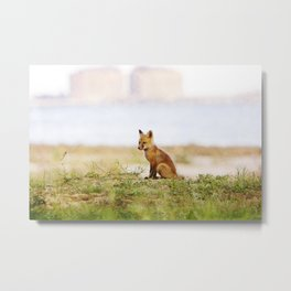 Baby Fox Metal Print