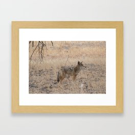 Coyote alone in the woods Framed Art Print