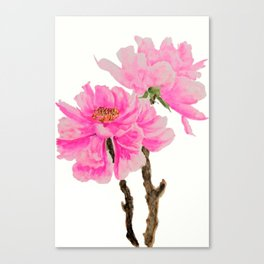 two pink peonies watercolor Canvas Print