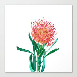 Pincushion protea flower Canvas Print