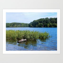 Burke Lake beauty Art Print