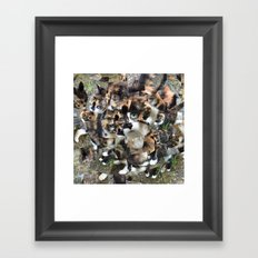 Green Eyed Cat Framed Art Print