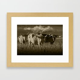 Sepia Tone of Texas Longhorn Steers under a Cloudy Sky Framed Art Print
