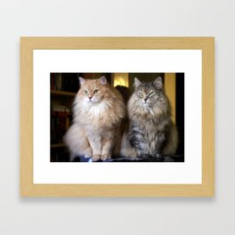 Mr. Cesare and Queen Cleopatra. Siberian cats Framed Art Print