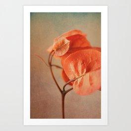 Sunny Bougainville(6) Art Print