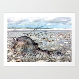 beached cowfish Art Print